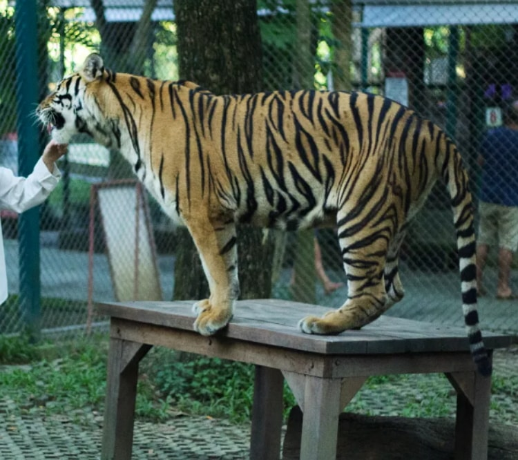 Nature of Beauty Tiger Kingdom