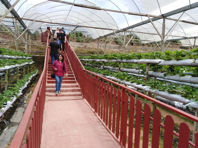 Genting Strawberry Leisure Farm, attraction in Genting Highlands