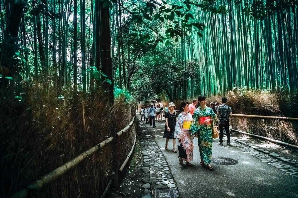 The most popular bamboo forest in Japan