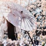 Things to do in places to see Cherry Blossom in Japan