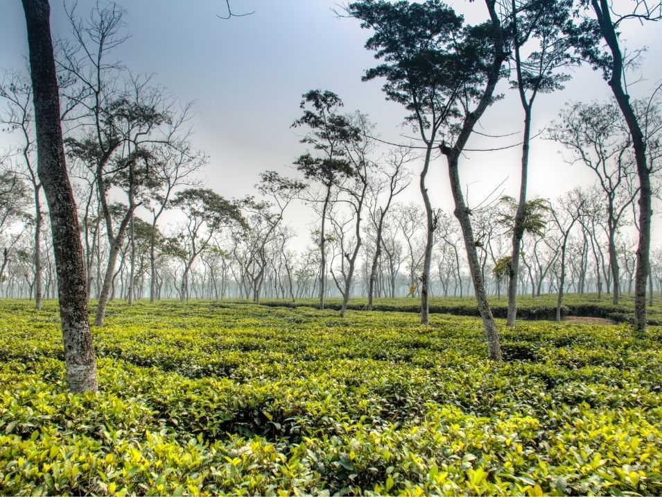 Srimangal is the tourist spot in Bangladesh