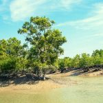 Visit The Mangrove Forest Sundarbans Tourist Spot In Bangladesh
