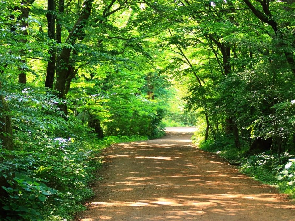 kochikhali forest one of the scenic areas in Sundarbans at Bangladesh
